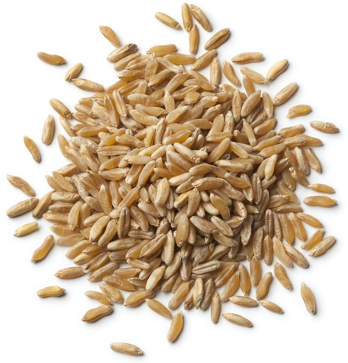 Kamut grano Khorasan